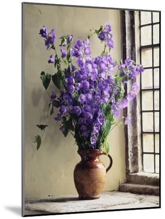 Canterbury Bells-Clay Perry-Mounted Premium Photographic Print