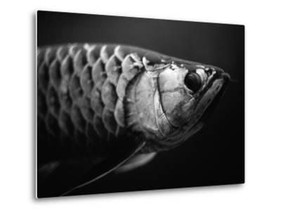 Fish-Henry Horenstein-Metal Print