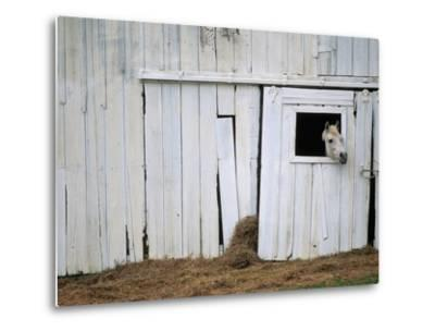 Horse Sticking Head out Barn Window-Kevin R^ Morris-Metal Print