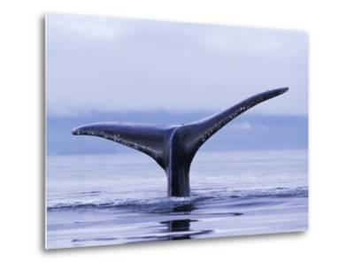 Tail Fin of Humpback Whale Sounding in Frederick Sound-Paul Souders-Metal Print