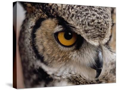 Eye of a Great Horned Owl-W^ Perry Conway-Stretched Canvas Print