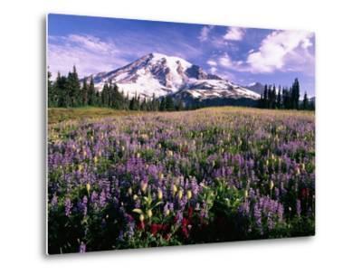 Wildflowers in Mt. Rainier National Park-Stuart Westmorland-Metal Print