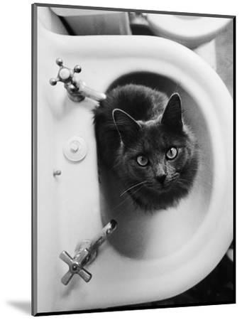 Cat Sitting In Bathroom Sink-Natalie Fobes-Mounted Premium Photographic Print