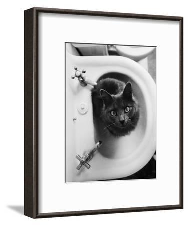 Cat Sitting In Bathroom Sink-Natalie Fobes-Framed Premium Photographic Print