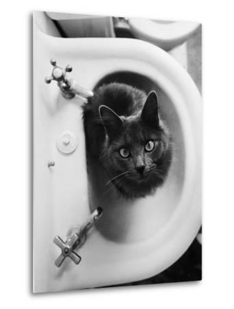 Cat Sitting In Bathroom Sink-Natalie Fobes-Metal Print