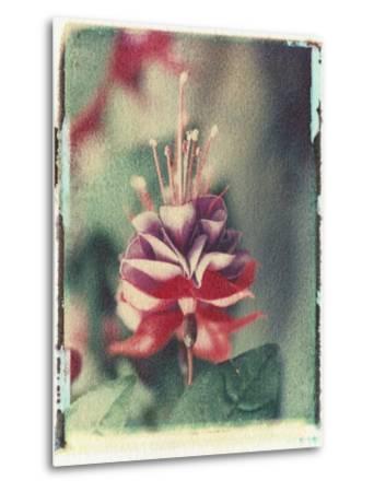 Freesia Flower-Natalie Fobes-Metal Print