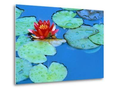 Lily Pads and Flower Blossom-Cindy Kassab-Metal Print
