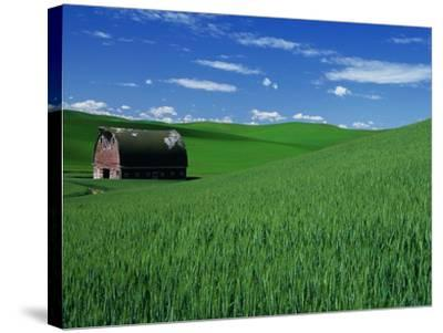 Red Barn in a Wheat Field-Darrell Gulin-Stretched Canvas Print