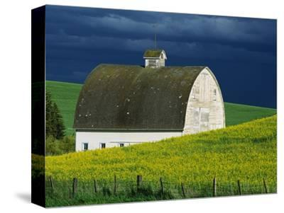 White Barn and Canola Field-Darrell Gulin-Stretched Canvas Print