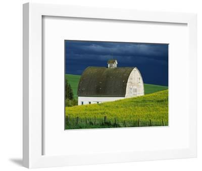 White Barn and Canola Field-Darrell Gulin-Framed Premium Photographic Print