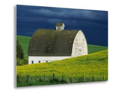 White Barn and Canola Field-Darrell Gulin-Metal Print