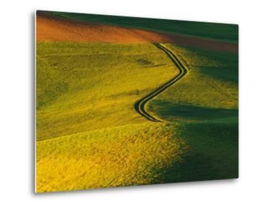 Wheat and Pea Fields-Darrell Gulin-Metal Print