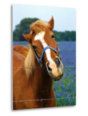 Horse Portrait-Darrell Gulin-Metal Print