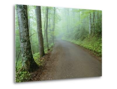 Road in Great Smoky Mountains National Park-Darrell Gulin-Metal Print