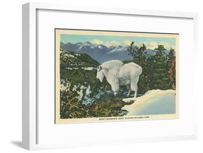 Rocky Mountain Goat, Glacier Park, Montana--Framed Art Print