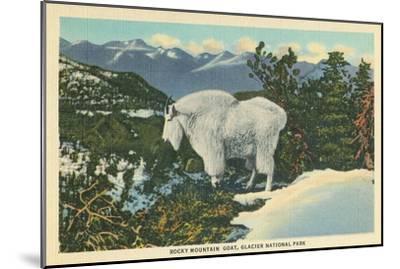 Rocky Mountain Goat, Glacier Park, Montana--Mounted Art Print