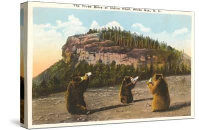 Bears at Indian Head, White Mountains, New Hampshire--Stretched Canvas Print