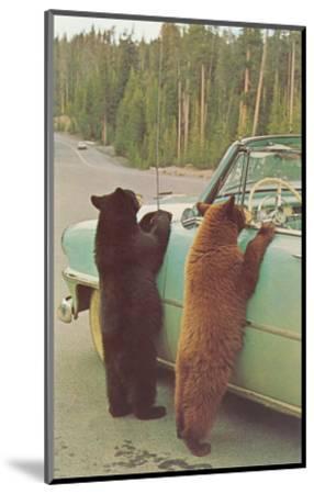 Bears Begging at Side of Car--Mounted Art Print