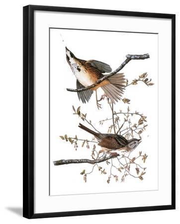 Audubon: Sparrow, 1827-38-John James Audubon-Framed Giclee Print