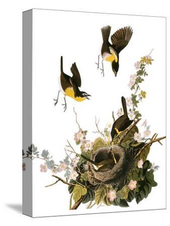 Audubon: Yellow Chat-John James Audubon-Stretched Canvas Print