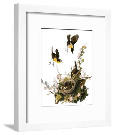 Audubon: Yellow Chat-John James Audubon-Framed Premium Giclee Print