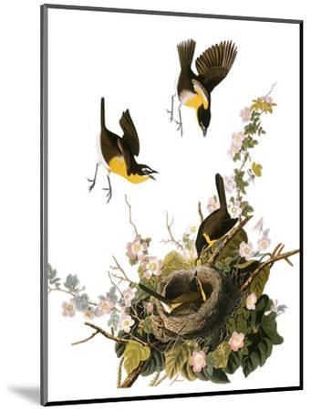 Audubon: Yellow Chat-John James Audubon-Mounted Premium Giclee Print