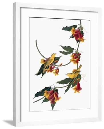 Audubon: Vireo, 1827-38-John James Audubon-Framed Giclee Print