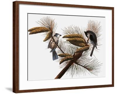 Audubon: Titmouse-John James Audubon-Framed Giclee Print