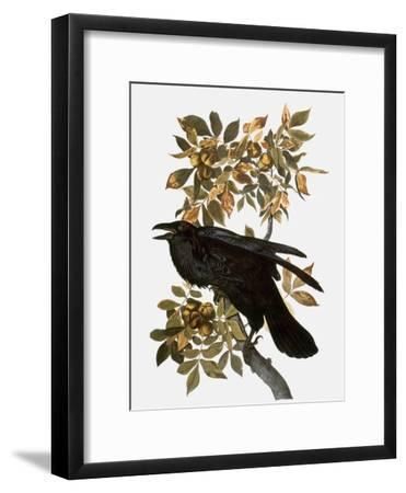 Audubon: Raven-John James Audubon-Framed Giclee Print
