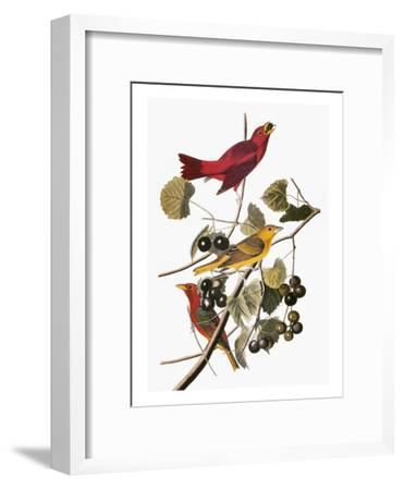Audubon: Tanager-John James Audubon-Framed Giclee Print