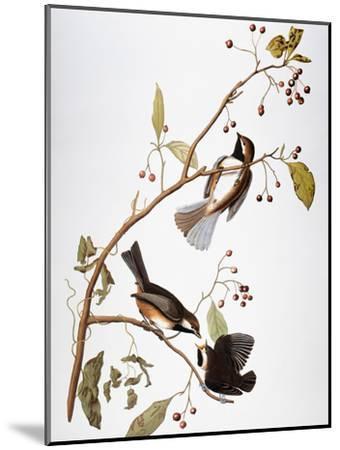 Audubon: Chickadee-John James Audubon-Mounted Giclee Print