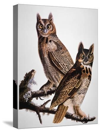 Audubon: Owl-John James Audubon-Stretched Canvas Print