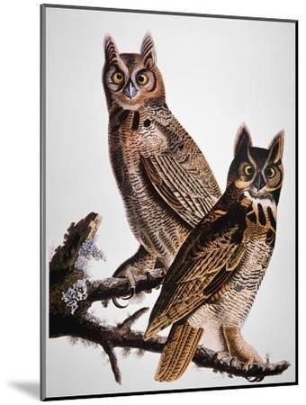 Audubon: Owl-John James Audubon-Mounted Giclee Print