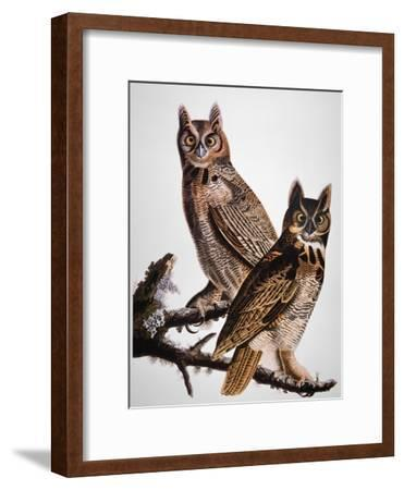Audubon: Owl-John James Audubon-Framed Giclee Print