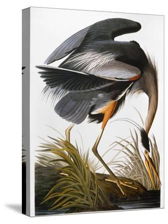 Audubon: Heron-John James Audubon-Stretched Canvas Print