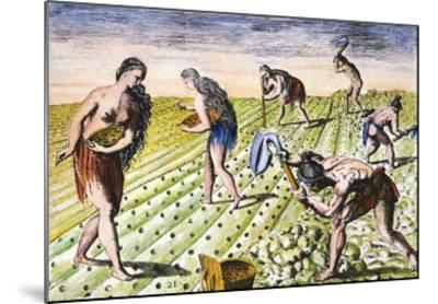 Florida Native Americans:Tilling 1591-Theodor de Bry-Mounted Giclee Print