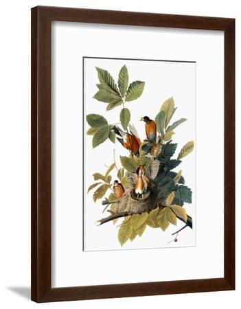 Audubon: Robin-John James Audubon-Framed Premium Giclee Print