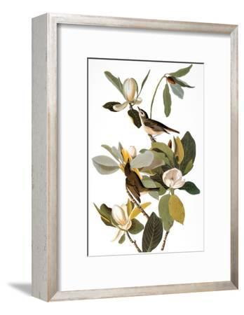 Audubon: Vireo-John James Audubon-Framed Giclee Print