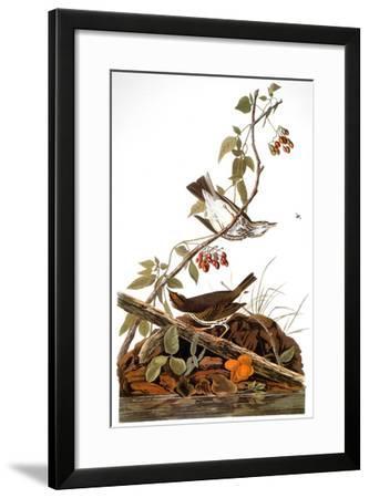 Audubon: Ovenbird-John James Audubon-Framed Giclee Print