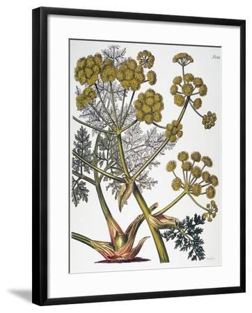 Herbal: Fennel, 1819--Framed Giclee Print