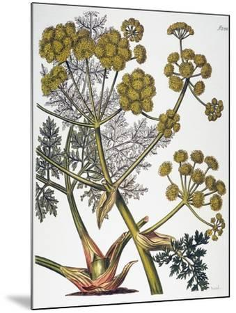 Herbal: Fennel, 1819--Mounted Giclee Print