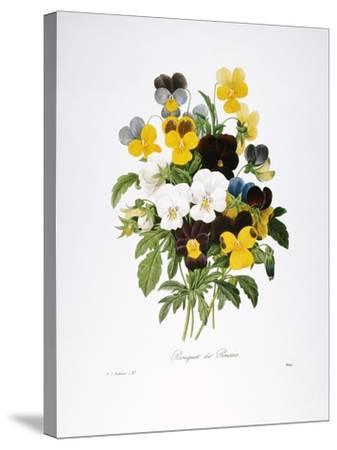 Redoute: Pansy, 1833-Pierre-Joseph Redout?-Stretched Canvas Print