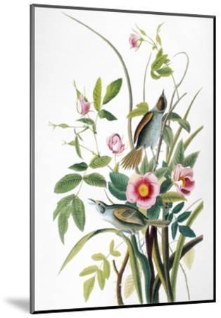 Seaside Sparrow, 1858-John James Audubon-Mounted Giclee Print
