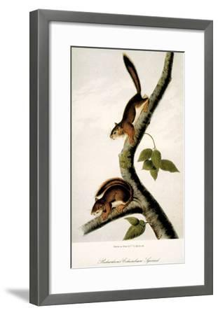 Squirrel--Framed Giclee Print