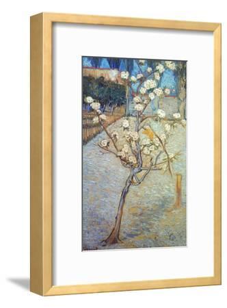 Van Gogh: Peartree, 1888-Vincent van Gogh-Framed Giclee Print