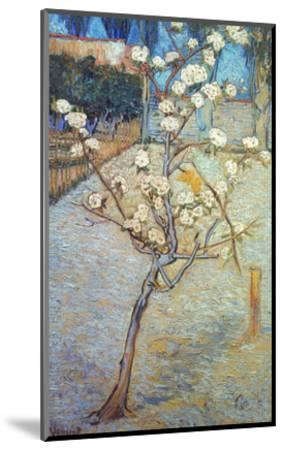 Van Gogh: Peartree, 1888-Vincent van Gogh-Mounted Giclee Print