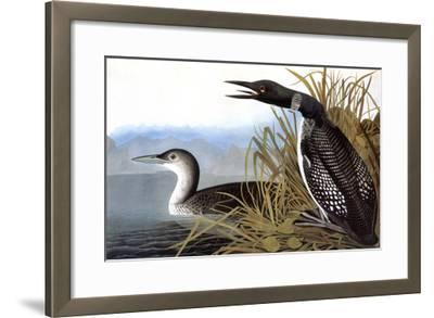 Audubon: Loon, 1827-John James Audubon-Framed Giclee Print