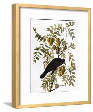 Audubon: Crow-John James Audubon-Framed Giclee Print