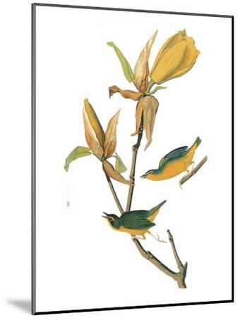 Audubon: Warbler-John James Audubon-Mounted Giclee Print