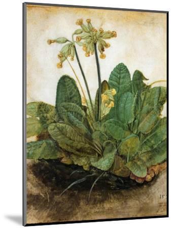 D?Rer: Tuft Of Cowslips-Albrecht D?rer-Mounted Premium Giclee Print